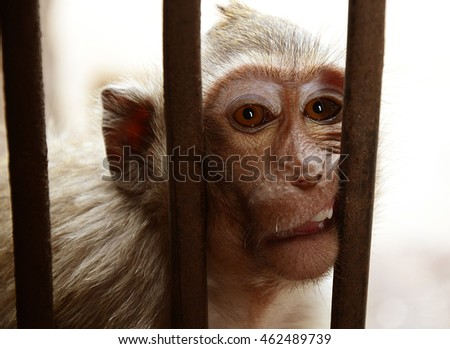 monkey was imprisoned
