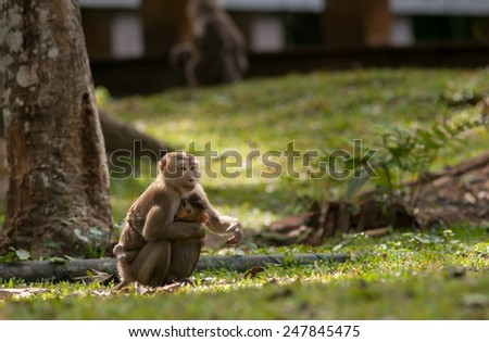 monkey with baby - stock photo