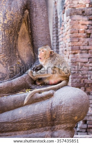 monkeys in the ancient temple in Lopburi city,Thailand