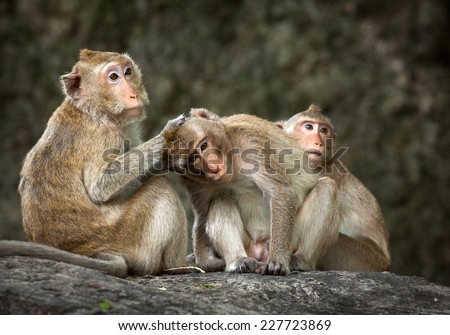 Two Monkeys in Love Monkeys Love Stock Photo
