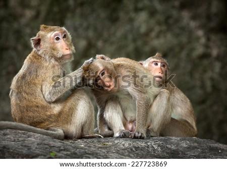 Two monkeys in love