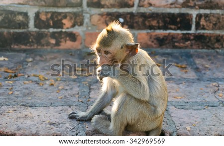 monkeys sitting on the floor eating a foods.