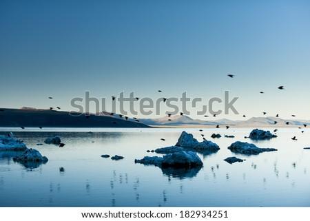 Mono Lake and bird crossing - stock photo