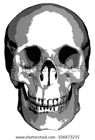Monochrome graphics - a human skull on a white background