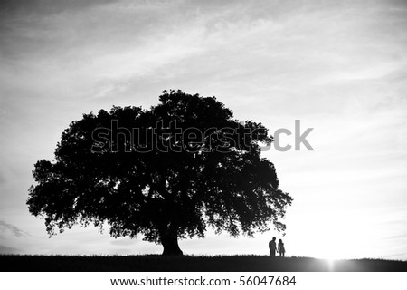 Monochrome image of a couple under a oak tree - stock photo