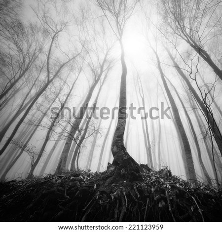 Monochrome mist landscape. Evening sun shines through the leaves of a forest. Trees wet after a rain.