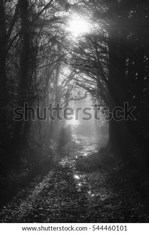 Monochrome Mist on a Woodland Path