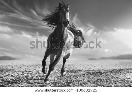 monochrome photo running horse with streamed mane on sunset sand - stock photo