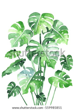 Monstera Stock Images Royalty Free Images Amp Vectors Shutterstock