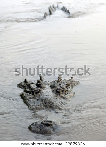 monstrous american crocodile submerged in water, tarcoles river, jaco, costa rica, central america - stock photo