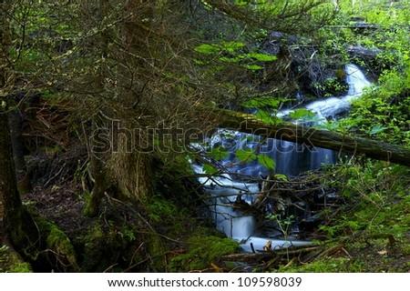 Montana Forest Landscape. Nature Photo Collection. Small Mountain Stream. Montana, USA - stock photo