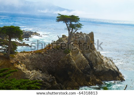 Monterey California shore:  the tree in the ocean