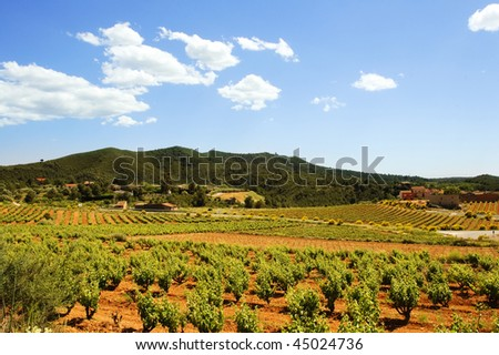 Montferri vineyards of Tarragona in Spain - stock photo