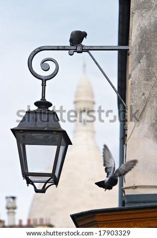 montmartre pigeons - stock photo
