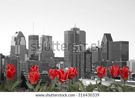 Montreal black and white cityscape with red tulip in front - stock photo