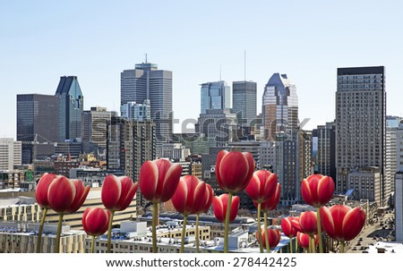 Montreal cityscape with red tulip in front - stock photo