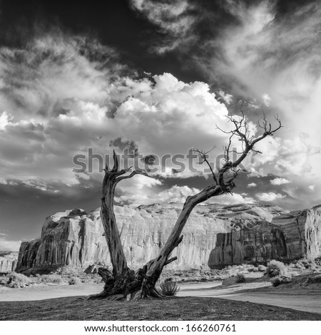 Monument Valley Juniper Tree and Mesa - stock photo