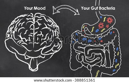 Mood and Gut Bacteria with chalk on Blackboard - stock photo