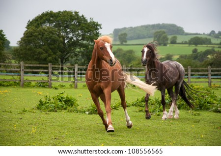 Moody mares - stock photo