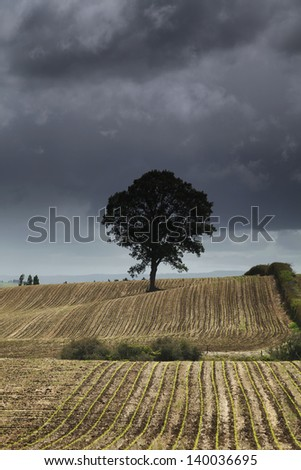Moody one tree on a harvested field. - stock photo