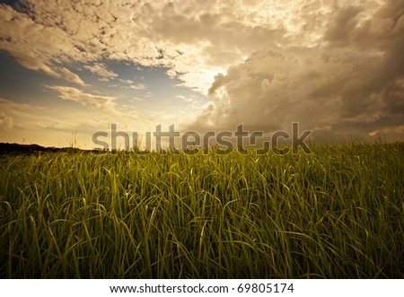 Moody sky and grass - stock photo