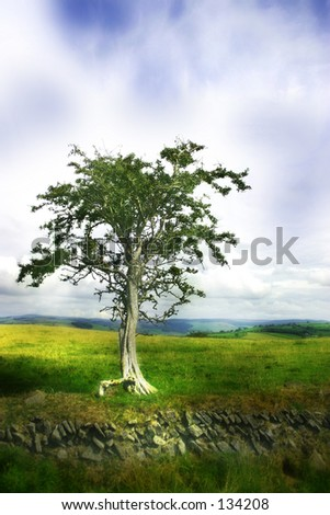 Moody tree, stylstic look.