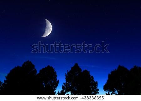 moon and sadow trees - stock photo