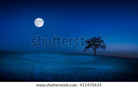 Moon and stars over tuscan meadow and lone tree - stock photo
