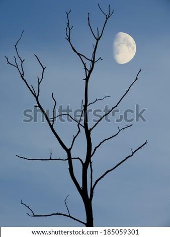 Moon behind trees - stock photo