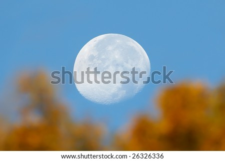Moon in the trees - stock photo