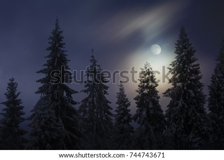 Moon night in winter forest