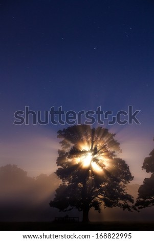 Moon shining through a tree symbolizing life and death - stock photo