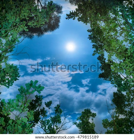 Moon through tree leaves at night at clear dark sky