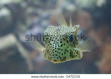 moonfish - stock photo
