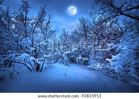 Moonlight night in winter wood - stock photo