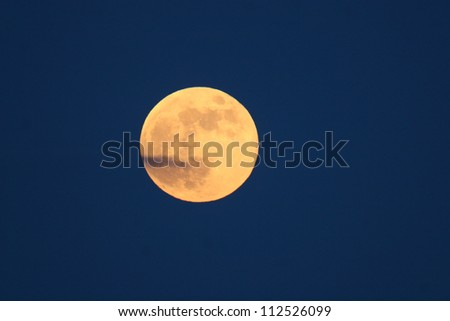 moonrise and pine forest - stock photo
