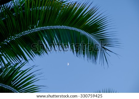 Moonrise framed by a  beautiful coconut palm tree in the Florida Keys - stock photo