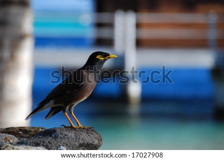 Moorea wildlife - stock photo