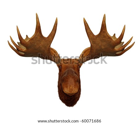 Moose Head Stock Photos, Images, & Pictures   Shutterstock