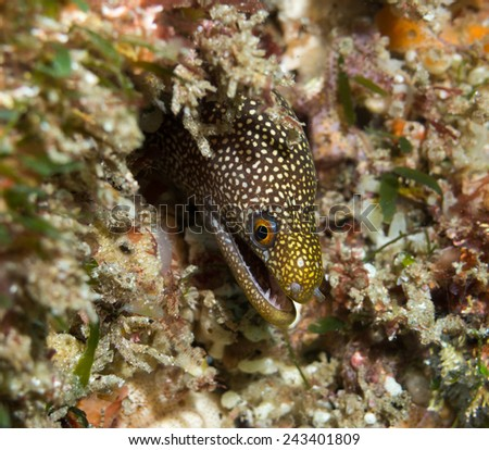 moray eel  - stock photo
