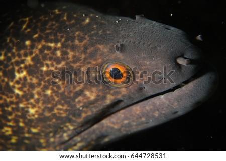 stock-photo-moray-eel-closeup-644728531.