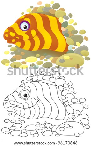 Moray eel looking out of a burrow, color illustration and black-and-white outline, on a white background - stock photo