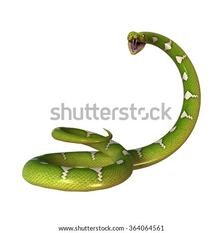 Morelia viridis, or green tree python, or herpetoculture hobby, chondro isolated on white background