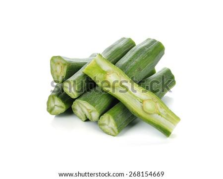 moringa isolated on a white background - stock photo