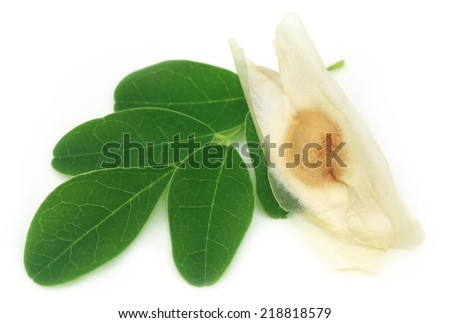 Moringa leaves with seed over white background - stock photo