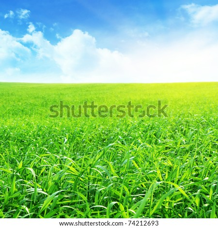 Morning and field of grass. - stock photo