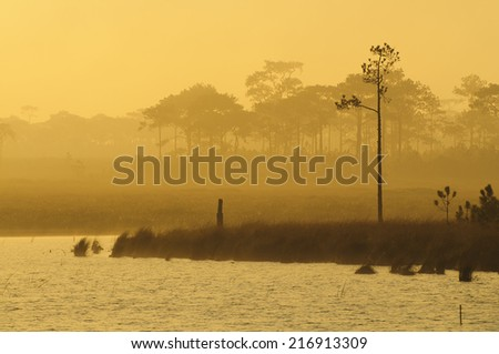 morning and fog - stock photo