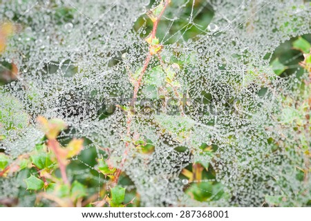 morning dew clinging to a mass of spider webs - stock photo