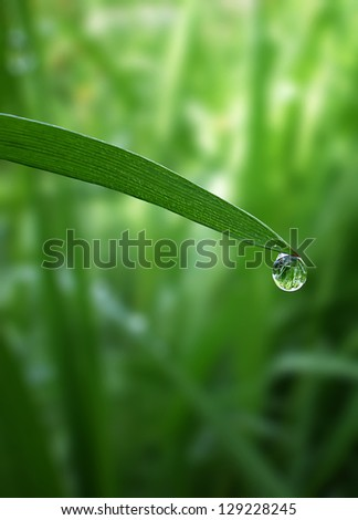 morning dew drop falling from fresh green grass - stock photo