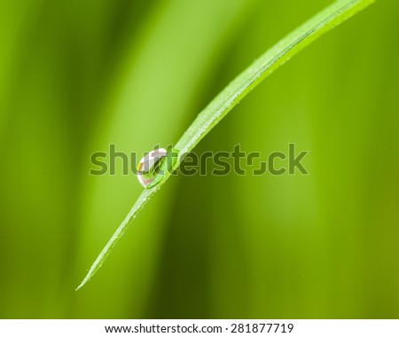 morning dew drop falling from fresh green grass. studio shot - stock photo